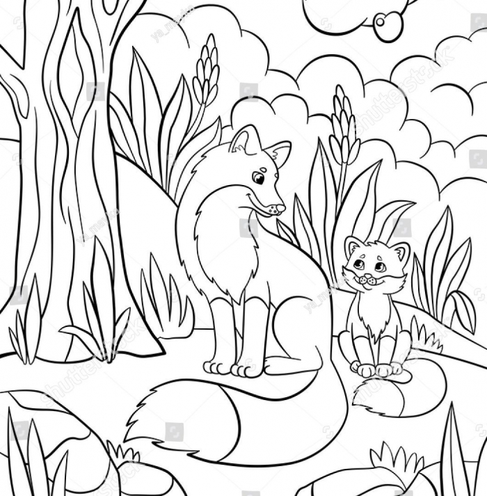 Image Result For Forest Animals Coloring Pages