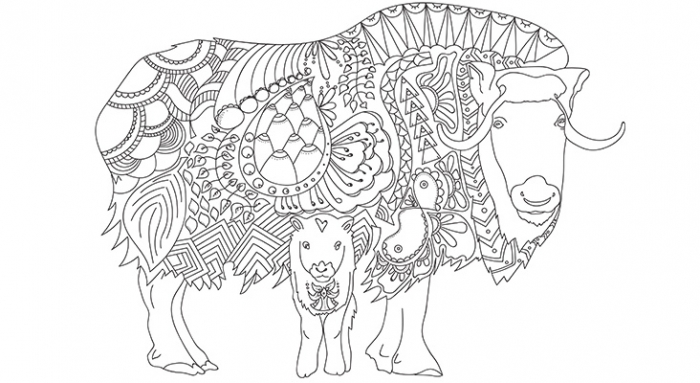 Arctic Colouring Pages