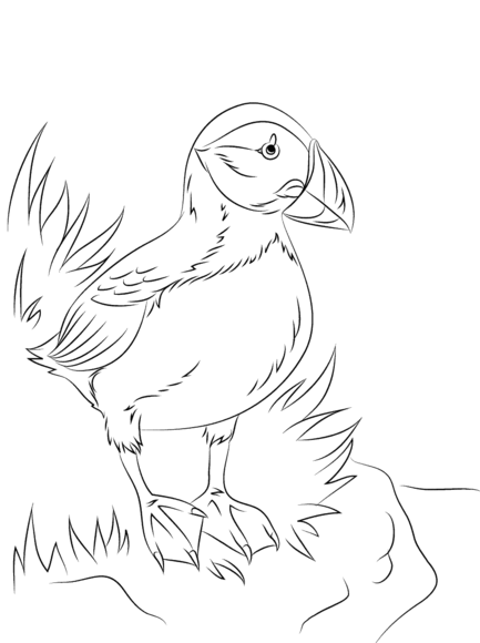 Atlantic Puffin Seabird Coloring Page North Pole