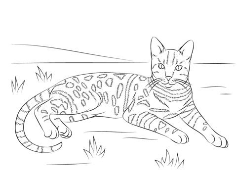Brown Spotted Tabby Bengal Cat Coloring Page