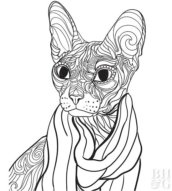 Free Pet Coloring Pages