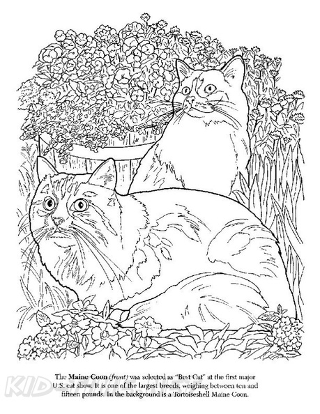Maine Coon Cat Breed Coloring Book Page