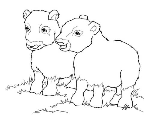 Musk Ox Babies Coloring Page