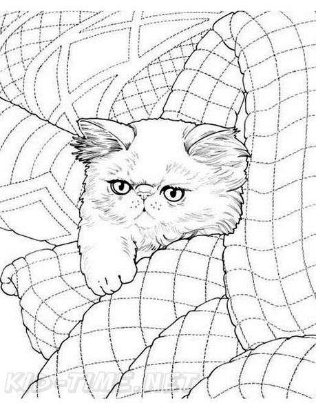 Persian Cat Coloring Page Realistic Cat Coloring Pages