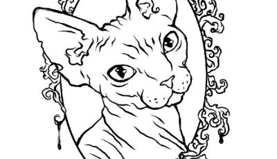 Sphinx Cat Coloring Hairless Cat Coloring Pages