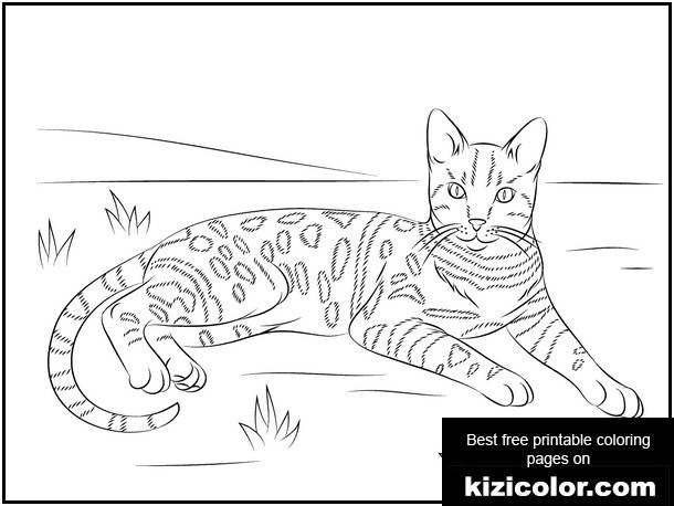 Spotted Free Printable Coloring Pages For Girls And Boys