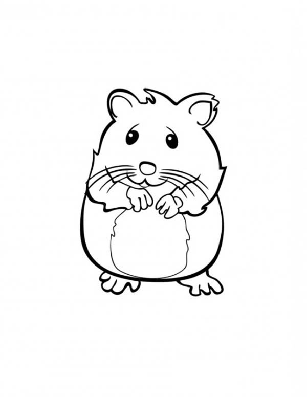 Syrian Hamster Coloring Free Printable Dwarf Time Telling