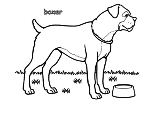 Boxer Dog Bowl Is Empty Coloring Pages  Best Place To Color
