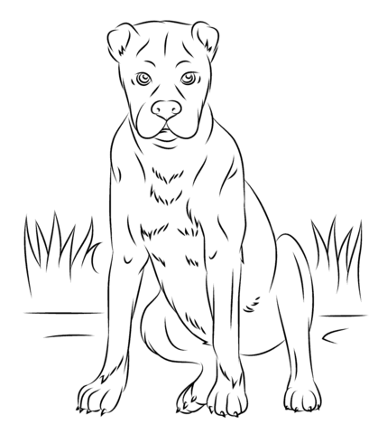 Boxer Dog Coloring Page