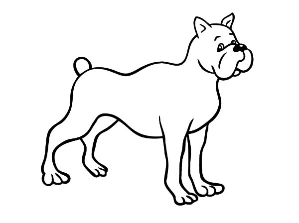 Boxer Dog Coloring Sheet Young Boxer Dog Coloring Page Free