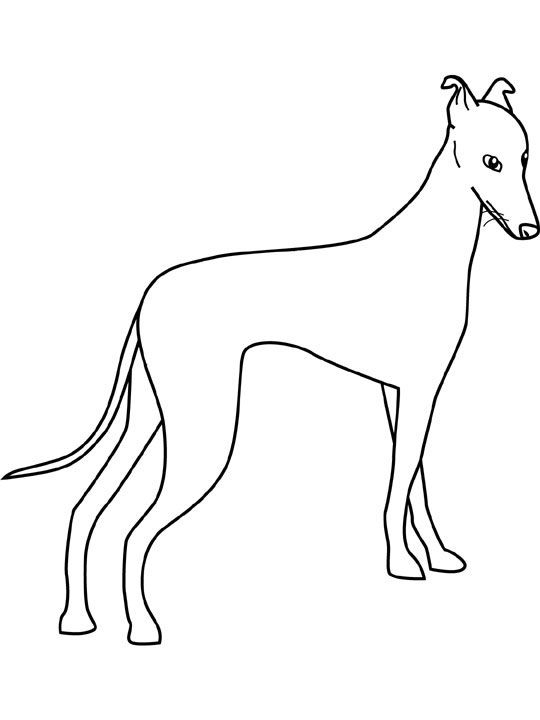 Dogs Coloring Pages Greyhound