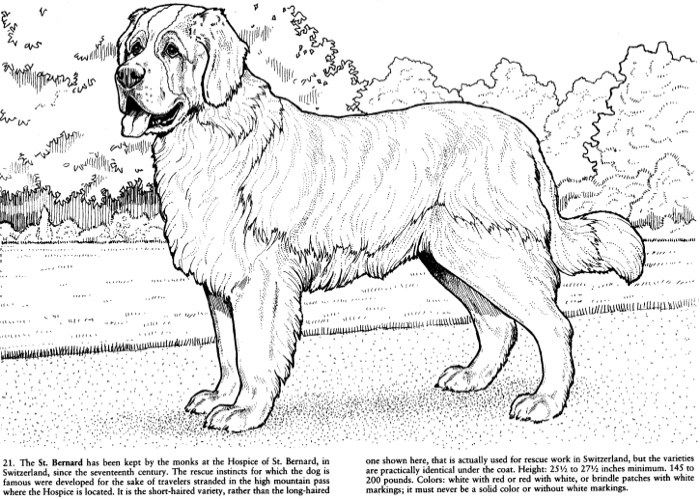 Favorite Dogs Coloring Book