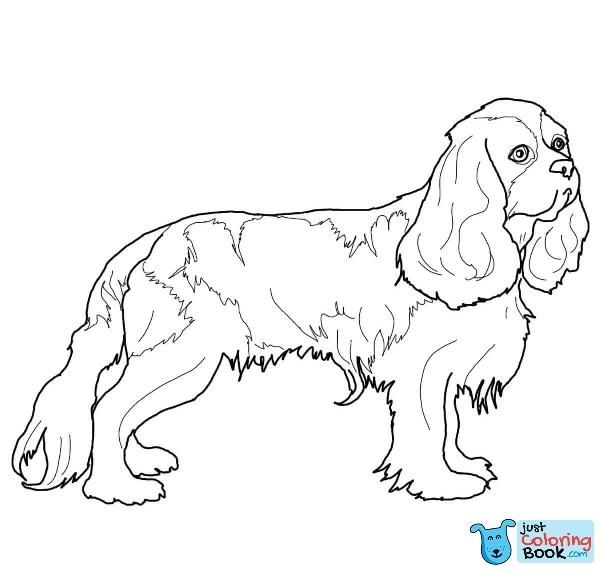 Free Download Cavalier King Charles Spaniel Coloring Pages