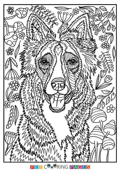 Free Printable Border Collie Coloring Page Available For Download