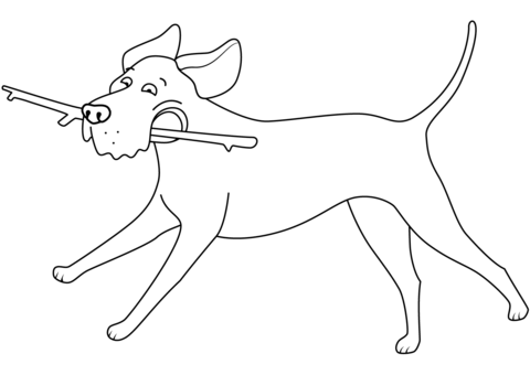 Funny Labrador Retriever Running With Stick Coloring Page