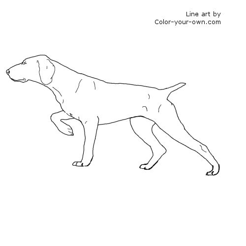 German Shorthair Pointer Dog Coloring Page
