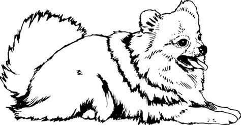 Image Result For Pomeranian Coloring Pages