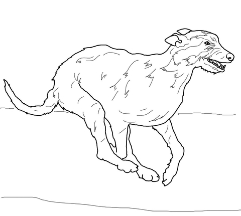 Irish Wolfhound Coloring Page