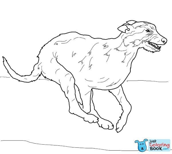 Irish Wolfhound Coloring Page Free Printable Coloring Pages With