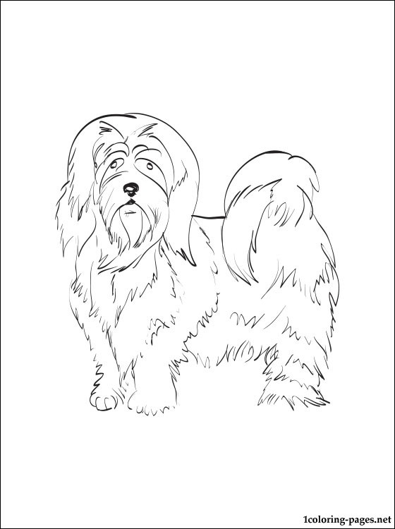 Lhasa Apso Coloring Page