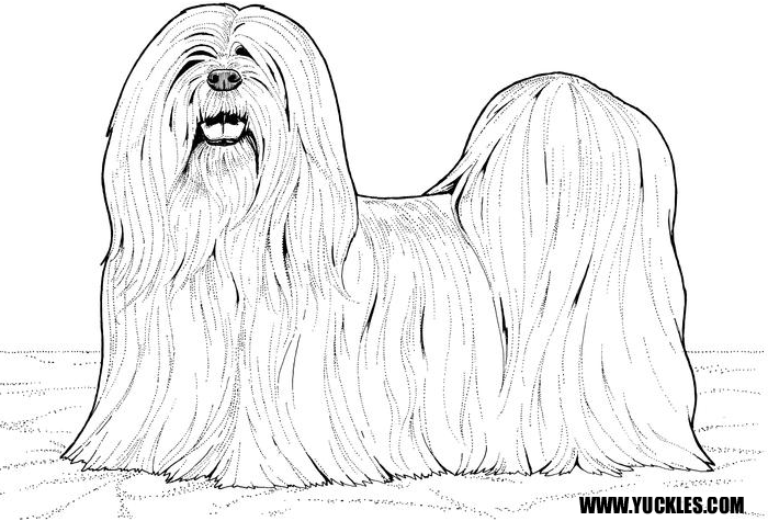 Lhasa Apso Coloring Page By Yuckles