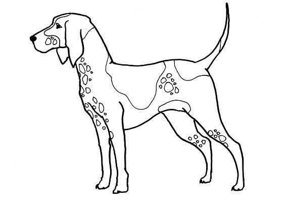 Printable Download Foxhound Coloring Page X And X