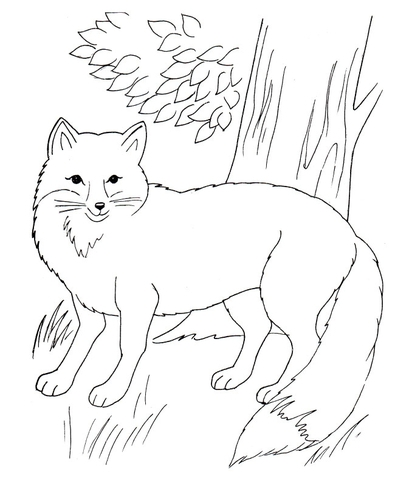 Red Fox In The Forest Coloring Page