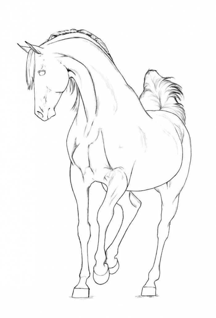 Arabian Horse Coloring Pages Related Keywords  Amp Suggestions