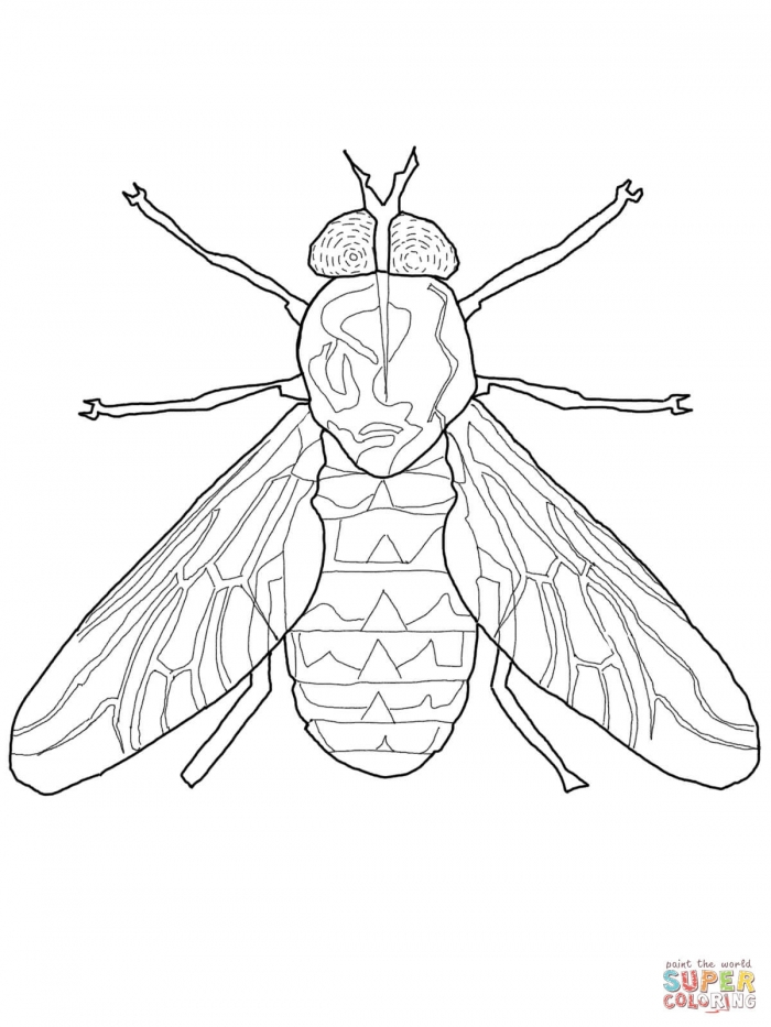Horse Fly Coloring Page