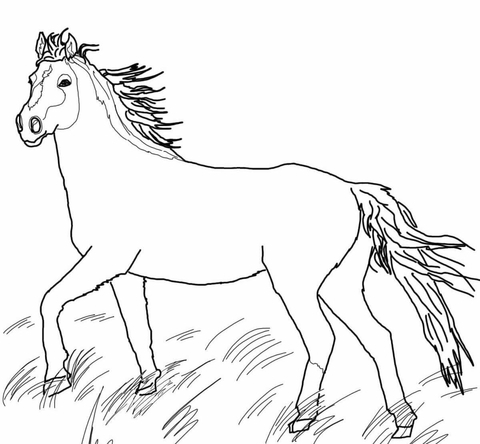 Mustang Wild Horse Coloring Page