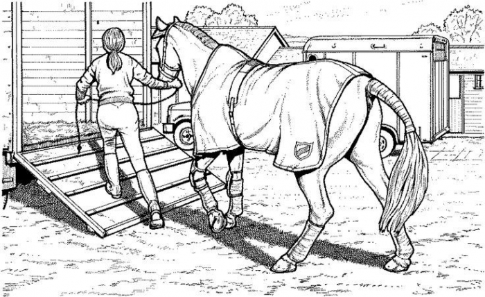 horse trailer coloring pages  free printable coloring sheets