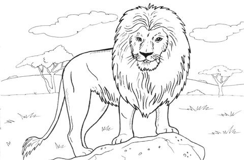 African Lion Coloring Page