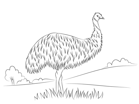 Cute Emu Coloring Page