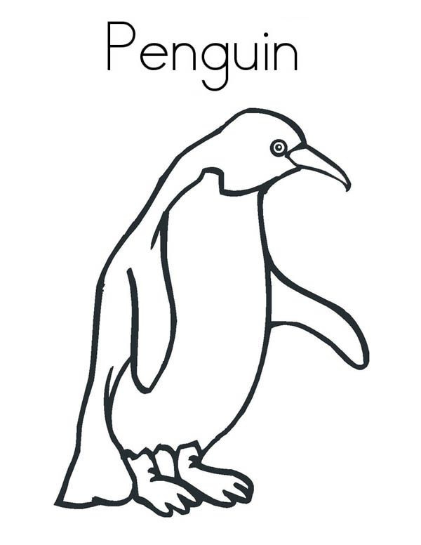 A Realistic Drawing Of Humboldt Penguin Coloring Page