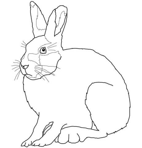 Arctic Hare Coloring Page From Hares Category Select From