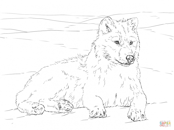 Arctic Wolf Coloring Page