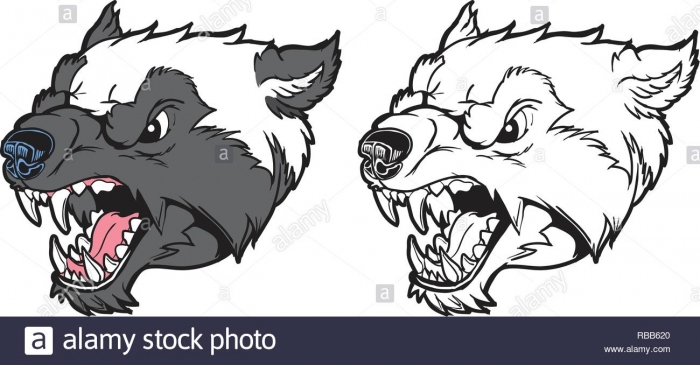 Badger Vector Vectors High Resolution Stock Photography And Images