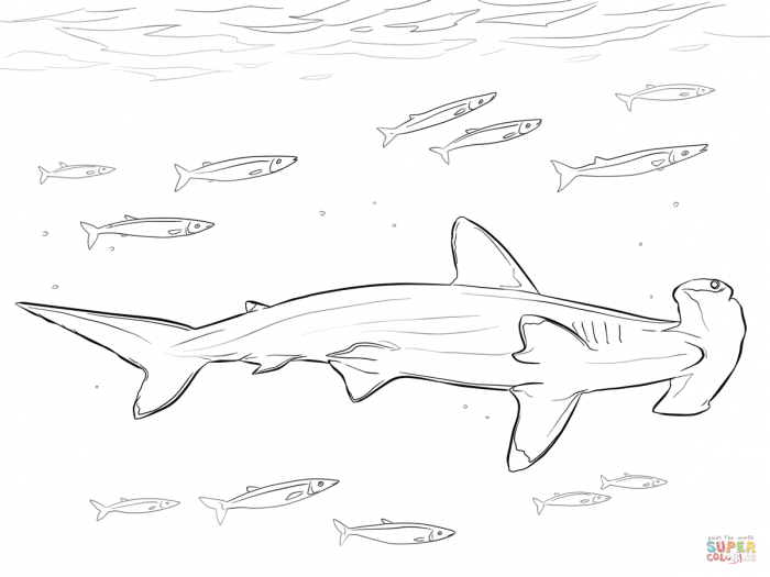 Hammerhead Shark With Pilot Fishes Coloring Page