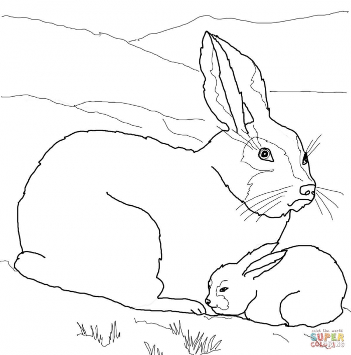 Hares Coloring Pages