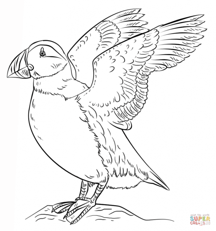 Puffins Coloring Pages