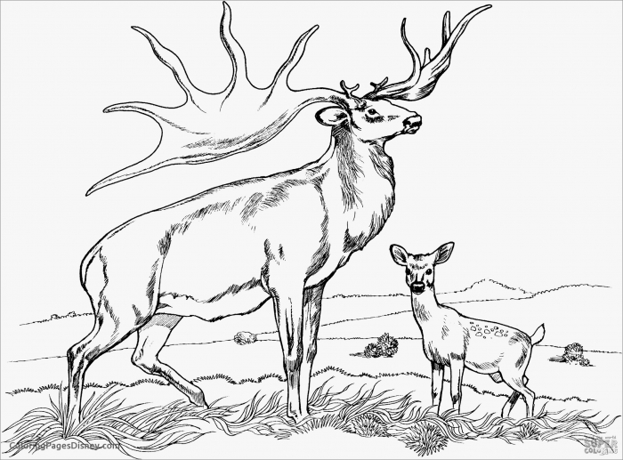 Realistic Caribou Coloring Page