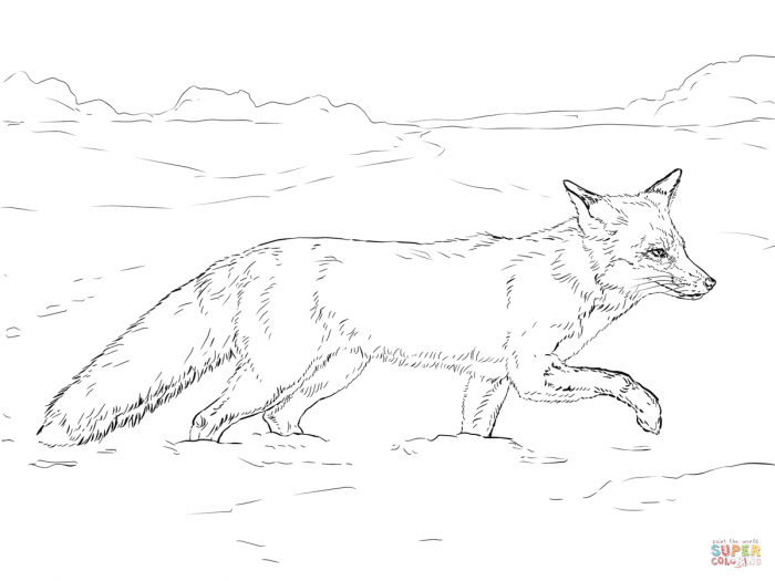 Red Fox Walking On Snow Coloring Page