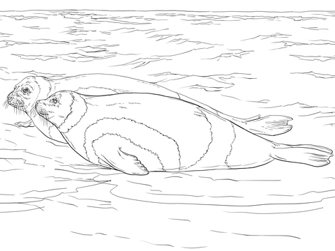 Ribbon Seals Coloring Page