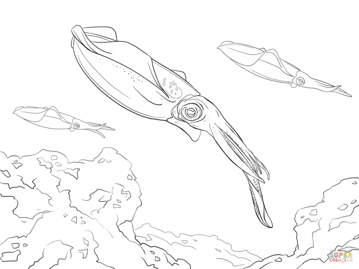 Bigfin Reef Squid Coloring Page