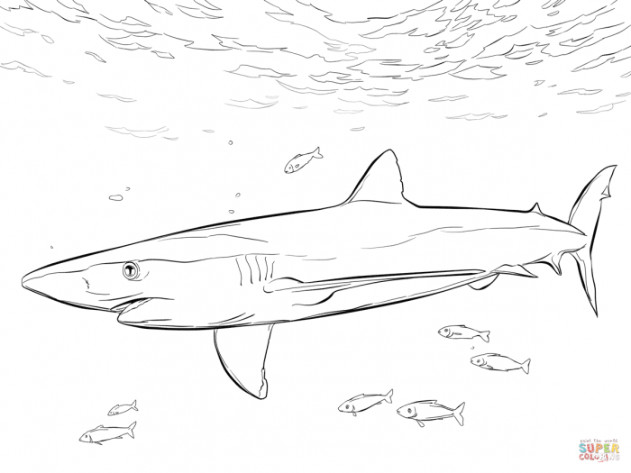 Blue Shark With Pilot Fishes Coloring Page From Blue Sharks