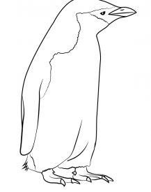 Realistic Chinstrap Penguin