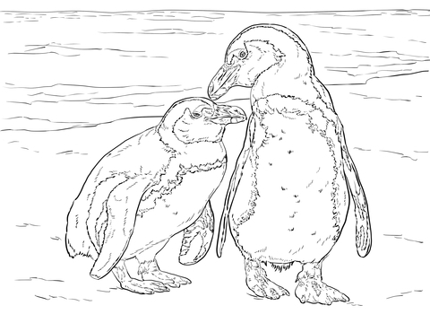 Two African Penguins Coloring Page