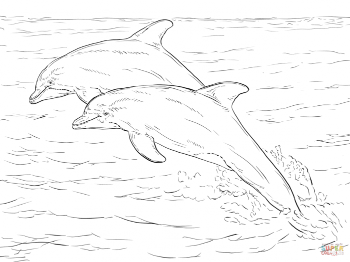 Two Atlantic Bottlenose Dolphins Coloring Page