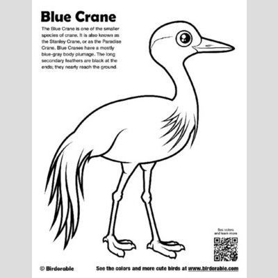Blue Crane Coloring Page  Fun Free Downloads   Activity Pages